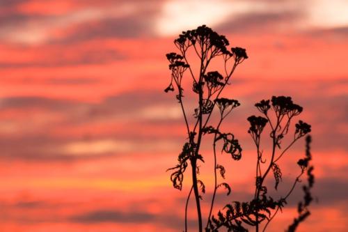 Bloem rode lucht