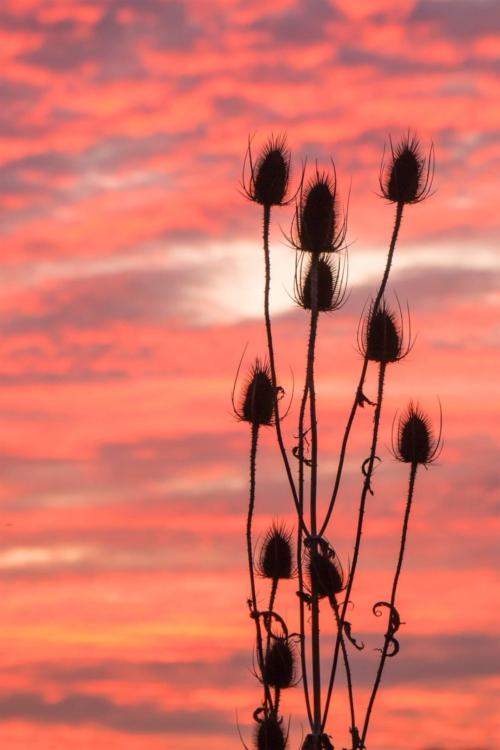 Bloemen rode lucht