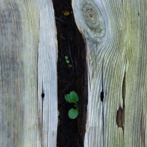 Bloemetje groeit uit paal