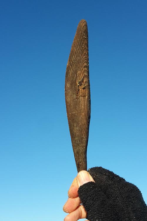 Drijhout veer
