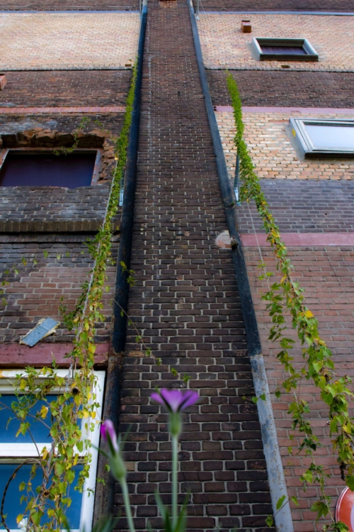 Klimop muur Honig complex Nijmegen